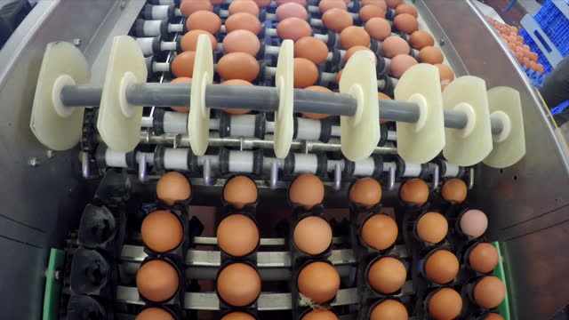 Interior shots of eggs in a sorting warehouse of an egg farm being sorted into cases by machinery on 28 March 2017 in Mentmore United Kingdom