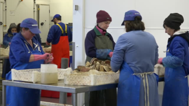 interior shots of fishing industry workers in a processing plant shelling oysters on 8 december 2019 in barra, scotland - mollusc stock videos & royalty-free footage