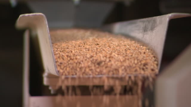 interior shots of mill machinery in operation with grains of wheat falling from conveyor chutes on 23 august 2020 in bristol united kingdom - flour mill stock videos & royalty-free footage