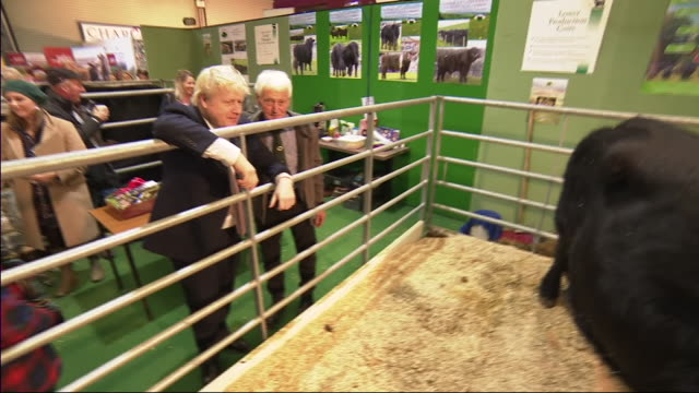 interior shots of prime minister, boris johnson arriving at the royal welsh showground and observing show cows, tractors and receiving a gift basket... - sheep stock videos & royalty-free footage