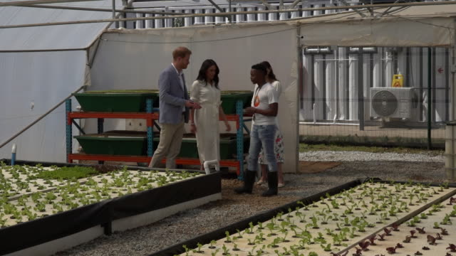 stockvideo's en b-roll-footage met interior shots of prince harry and meghan duchess of sussex inspecting hydroponic vegatables being grown in an industrial enclosure on a visit to the... - johannesburg