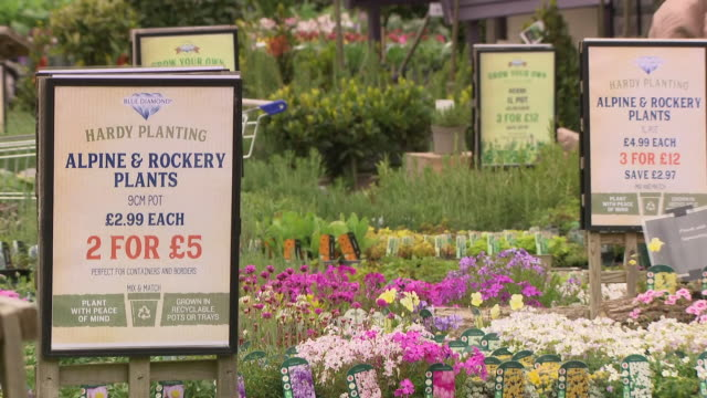 interior shots of shoppers browsing displays and selections at reopened garden centre as lockdown restrictions eased on 13th may 2020 in horsham,... - flowerbed stock videos & royalty-free footage