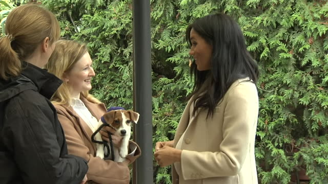 interior shots of the duchess of sussex at animal welfare charity mayhew meeting exresident/rescued dog maggie and foxy the dog on 16 january 2019 in... - animal welfare stock videos and b-roll footage