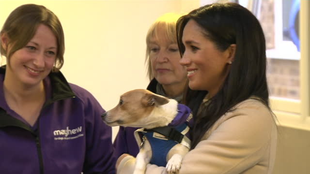 interior shots of the duchess of sussex meeting dogs at welfare chairty mayhew on16 january 2019 in london united kingdom - charity benefit stock videos & royalty-free footage