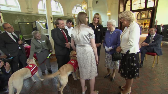 vídeos de stock, filmes e b-roll de interior shots of the queen and camilla duchess of cornwall watching medical detection dogs being put through their paces during a demonstration on... - 2018