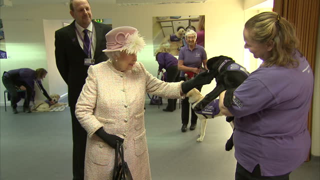 vídeos de stock, filmes e b-roll de interior shots of the queen meeting trainee disability assistance dogs at the headquarters of the charity canine partners petting young puppies at... - 2017