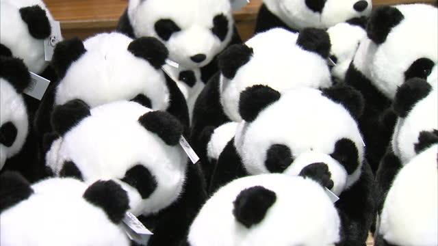 interior shots of toy pandas for sale at the souvenir shop at edinburgh zoo toy pandas at edinburgh zoo souvenir shop at edinburgh zoo on september... - flightless bird stock videos & royalty-free footage