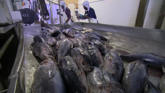 interior shots of tuna fish on a production line in a tuna processing plant on 9 february 2018 in victoria seychelles - canning stock videos & royalty-free footage