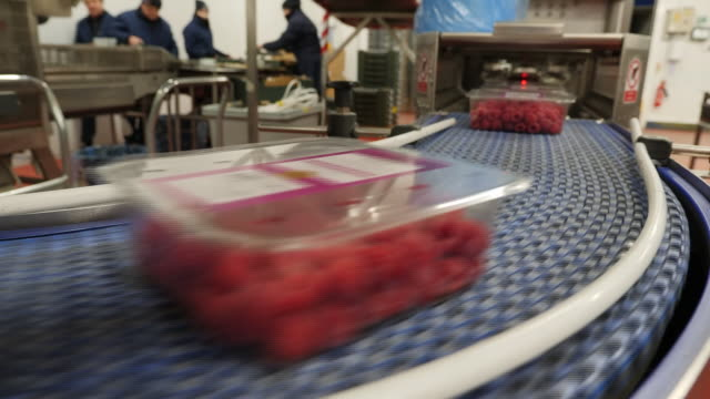 interior shots of workers sorting and organising plastic containers full of raspberries and blueberries at a fruit factory on 28 march 2020 in... - ordering stock videos & royalty-free footage