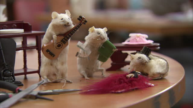 interior shots stuffed mice includes taxidermy mice playing a guitar lying down wearing a top hat and with a sewing kit stuffed taxidermy mice made... - stuffed stock videos & royalty-free footage