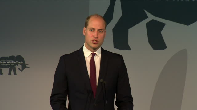 interior views of prince william making a speech at the 2018 illegal wildlife trade conference at battersea park on october 11, 2018 in london,... - battersea park stock videos & royalty-free footage