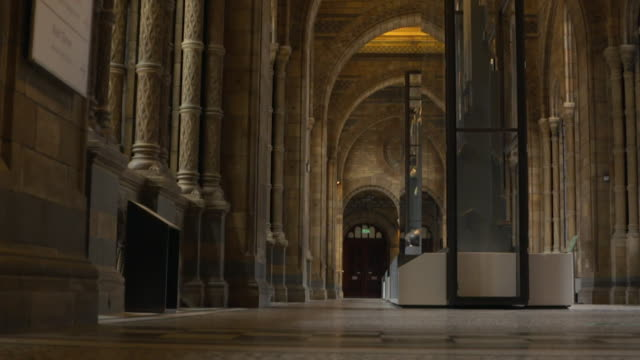 interiors of empty natural history museum in london, during it's closure during the coronavirus pandemic lockdown - museum stock videos & royalty-free footage