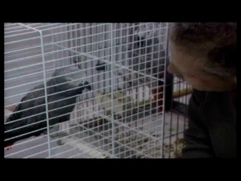 interiors var birds & parrots talking, performing tricks. interior interview peter borg, owner of pepe the parrot. interiors sky news reporter ross... - var stock videos & royalty-free footage