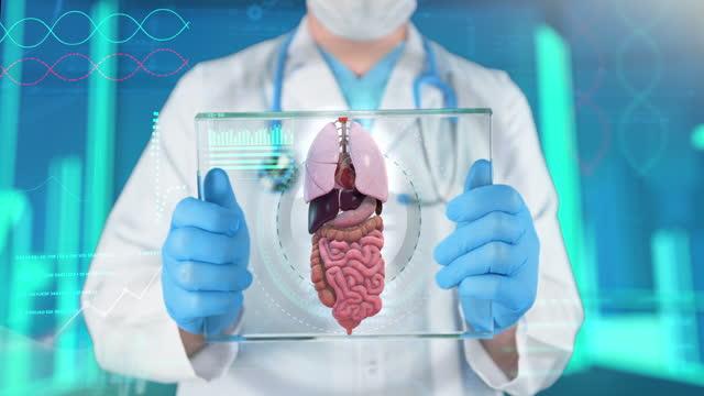 internal organs examining - 4k resolution - pancreas stock videos & royalty-free footage