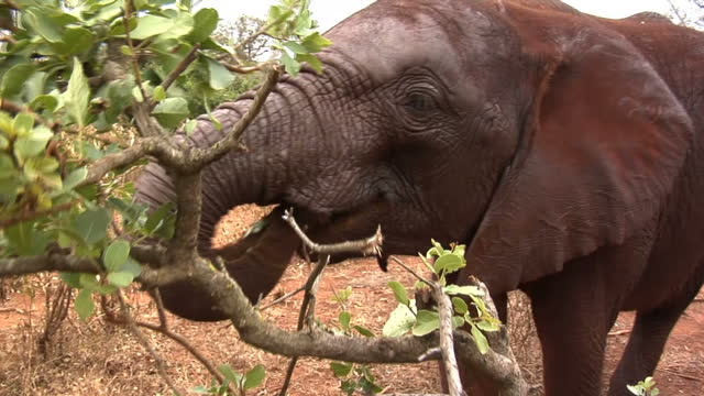 Interpol is carrying out the biggest ever antielephant ivory poaching operation Wildlife agents in 14 different African countries have been raiding...