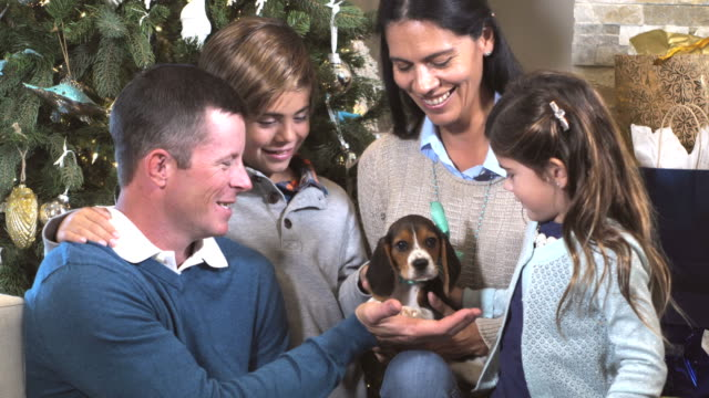 interracial family by christmas tree with puppy - puppy stock videos and b-roll footage