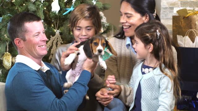 vidéos et rushes de famille interracial par arbre de noël avec le chiot - chiot