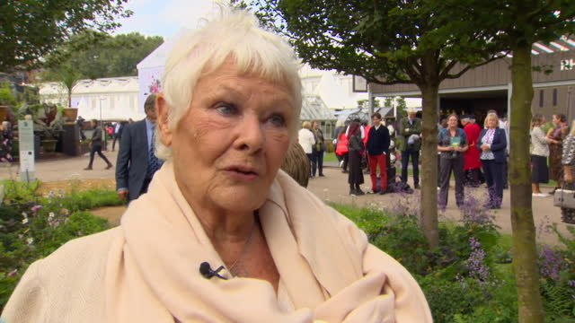"""interview dame judi dench, at the chelsea flower show, """"i'm not a gardener at all because i'm frightened of worms"""" - gardening stock videos & royalty-free footage"""