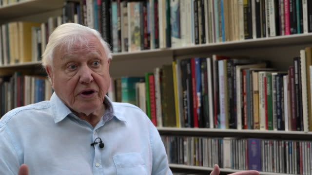 """interview david attenborough, naturalist, about climate change and the urgency to do something """"the moment of crisis has come"""" - crisis stock videos & royalty-free footage"""