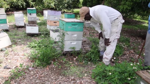 interview long shot of steve walking up to apiary and showing the dead bees lying on the floor and explaining how the infestation spreads in a hive... - infestation stock-videos und b-roll-filmmaterial