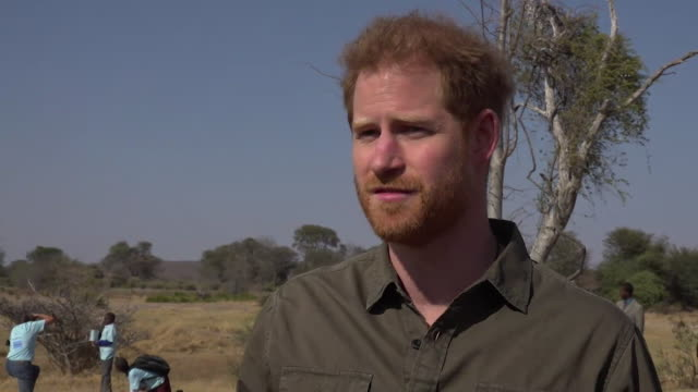 """interview prince harry about what botswana means to him during visit to kasane on his tour of africa """"i came here straight after my mum died and it... - ボツワナ点の映像素材/bロール"""