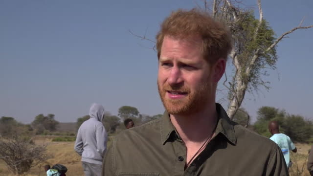 interview prince harry talks about climate change on visit to kasane botswana on his tour of africa it is a race against time that we are losing... - climate science stock videos & royalty-free footage