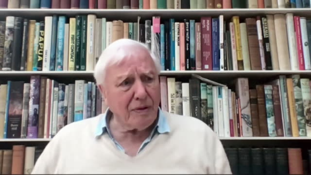 interview sir david attenborough about why he signed up to instagram the message is so important i'll use any medium i can - writing stock videos & royalty-free footage