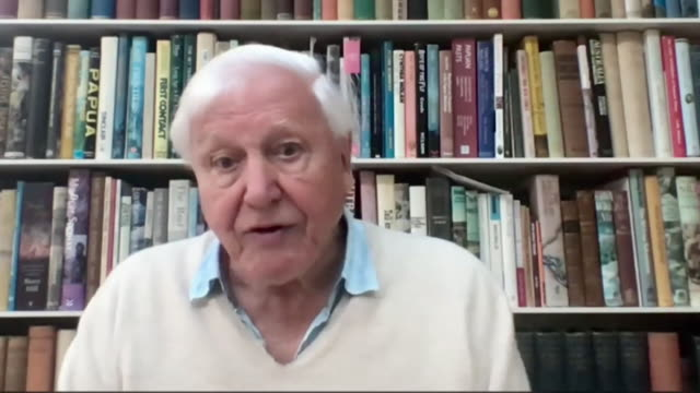 interview sir david attenborough, on doing what is in our power to save the natural world and praising china for pledging to become carbon neutral by... - climate change stock videos & royalty-free footage