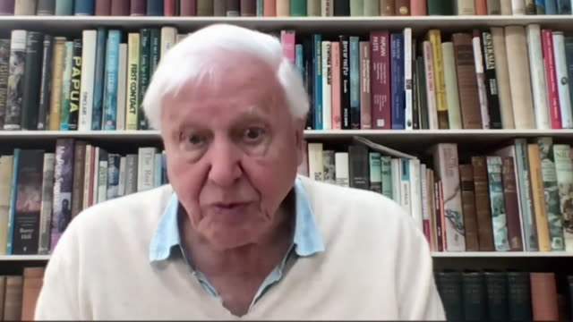 """interview sir david attenborough, on not wasting anything """"don't waste anything, treat the natural world like it's precious, which it is, and don't... - zoom stock videos & royalty-free footage"""