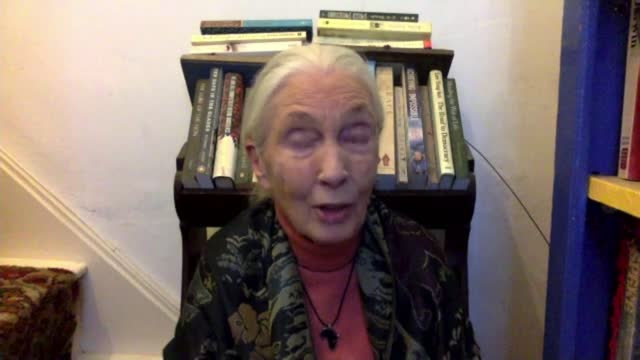 interview with environmentalist jane goodall; england: london: gir: int dr jane goodall 2-way interview via internet sot - channel 4 news stock videos & royalty-free footage