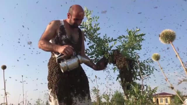 vidéos et rushes de interview with turkish man named abdulvahap semo who attempts to break a guinness world record, covering himself by bees weighing more than 63.7... - abeille