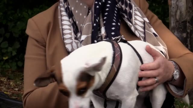 vídeos de stock, filmes e b-roll de interviews with sally ingram director of student health and wellbeing at newcastle university whose jack russell bessie can be lent to students to... - bem estar mental