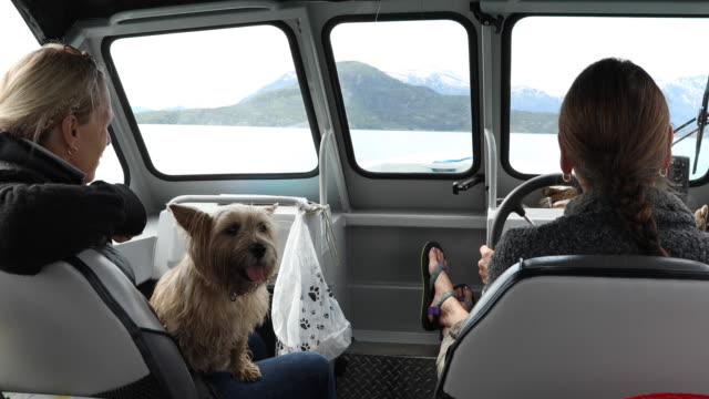 pov into motorboat cab during lake exploration - paw print stock videos & royalty-free footage