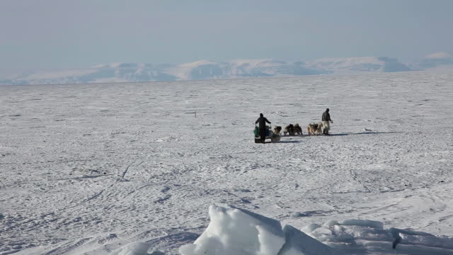 inuit hunter and sled - inuit stock videos & royalty-free footage