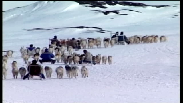 vídeos de stock e filmes b-roll de inuit leader campaigns against stansted airport expansion t09050639 back view teams of huskies along in race - inuit