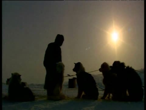 inuit man setting huskies in their harnesses for sledding arctic - inuit stock videos & royalty-free footage