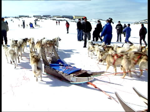 inuit people / husky dogs / fishing boats / fishermen / sled race / ilulissat town / snowscapes / seascapes; more of huskies after sled race /... - inuit bildbanksvideor och videomaterial från bakom kulisserna
