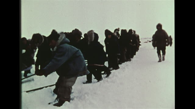 inupiat eskimo indigenous peoples on shore, many pulling bowhead whale out of water using three long ropes. legal, united states law, iwc approved... - inuit bildbanksvideor och videomaterial från bakom kulisserna