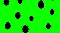 Invasion of beetles