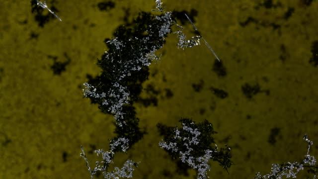 vídeos y material grabado en eventos de stock de iodine is oxidized by trivalent iron ions to a single substance - polarizador