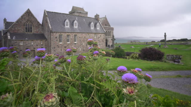iona abbey (an abaid) scotland and the purple thistles of artichokes blowing in the wind - hebrides stock videos & royalty-free footage