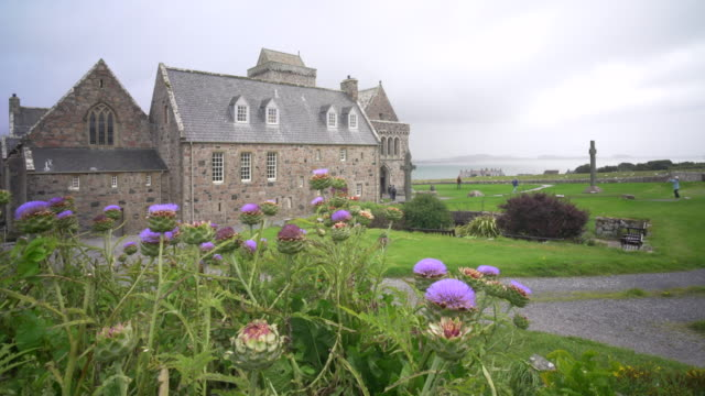 iona abbey (an abaid) scotland and the purple thistles of artichokes blowing in the wind - scotland stock videos & royalty-free footage