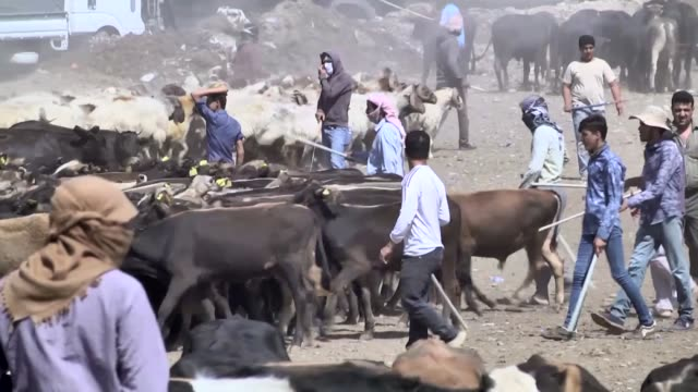 iraqi breeders display and sell sacrificial animals at a livestock market set up for the upcoming muslim holiday of eid aladha on august 08 2019 in... - breeder stock videos and b-roll footage