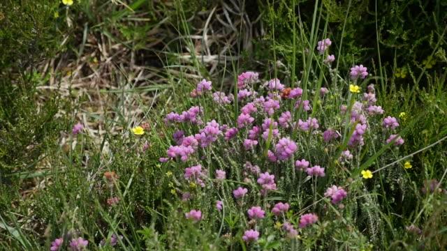 ireland clara bog heather - wildflower stock videos and b-roll footage