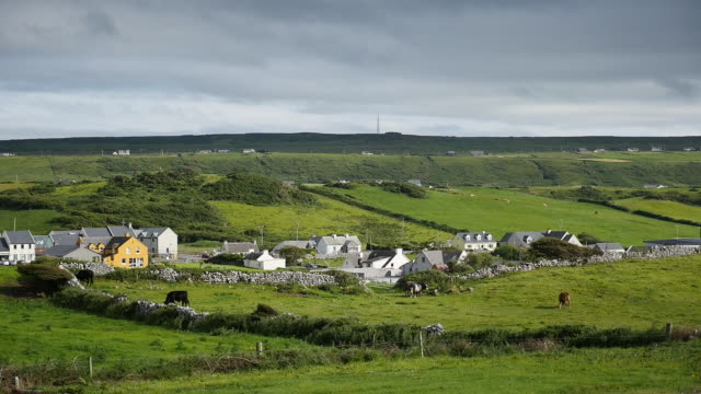 ireland county clare doolin village with cows grazing - doolin stock videos & royalty-free footage