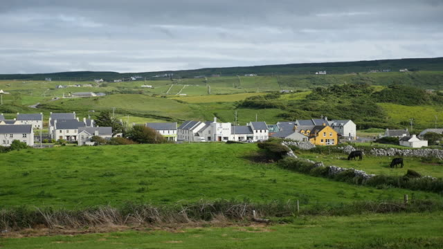 ireland county clare doolin village with fields and cows - doolin stock videos & royalty-free footage