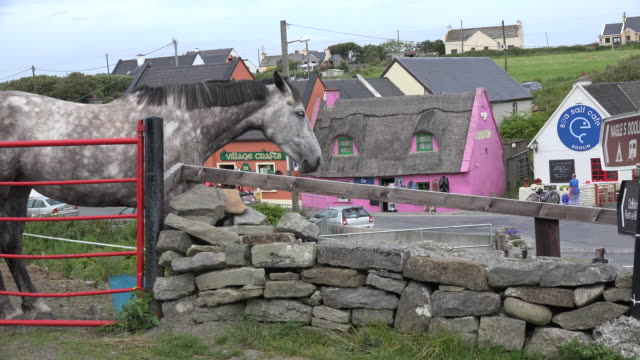ireland county clare horse at doolin village - doolin stock videos & royalty-free footage