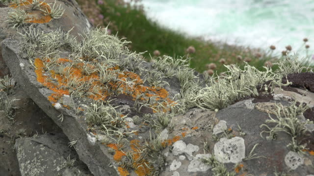 Ireland County Clare mosses and lichens on rocks