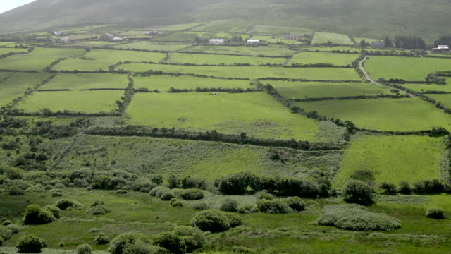 ireland dingle landscape with hedgerows - stone material stock videos & royalty-free footage