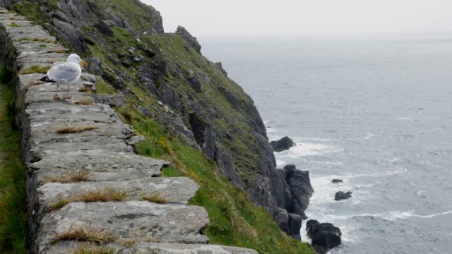 ireland dingle peninsula slea head sea gull - stone wall stock videos and b-roll footage